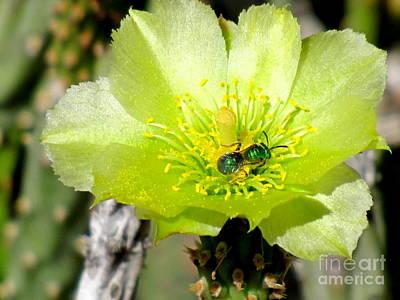 Marilyn Photograph - Green Cholla Beauty by Marilyn Smith