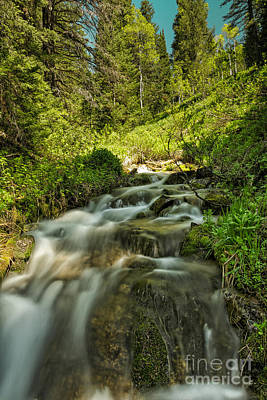 Green Colors And A Stream Art Print by Mitch Johanson