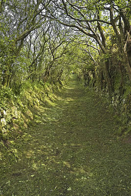 Photograph - Green Country Lane by Jane McIlroy