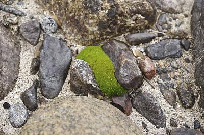 Moss Photograph - Green Curve by Priya Ghose