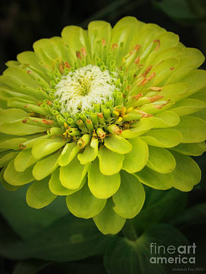 Photograph - Green Dahlia by Deborah Fay