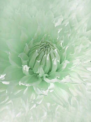 Photograph - Green Dahlia Flower  by Jennie Marie Schell