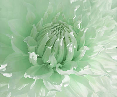 Photograph - Green Dahlia Flower Macro by Jennie Marie Schell