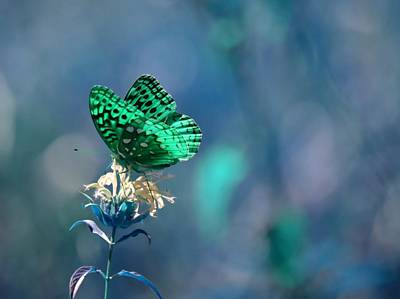 Photograph - Green by Deena Stoddard
