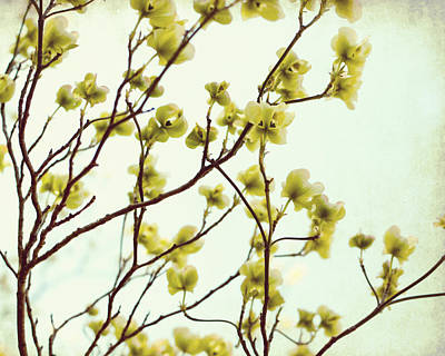 Floral Photograph - Green Dogwood by Lupen  Grainne