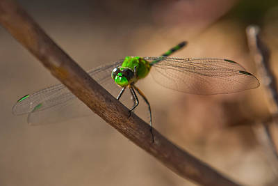 Edward Hopper - Green Dragonfly by Craig Lapsley
