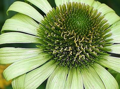 Photograph - Green Envy by Bruce Bley