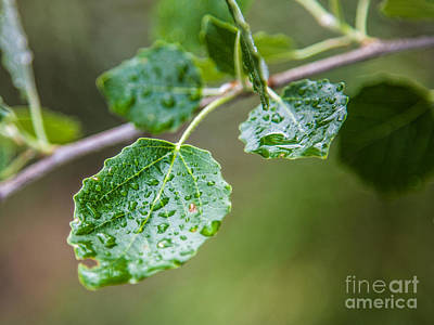 Photograph - Green by Eugenio Moya