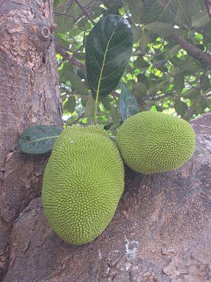 Green Exotic Fruit Art Print by Elena Wells