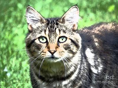 Photograph - Green Eyed Cat by Gena Weiser