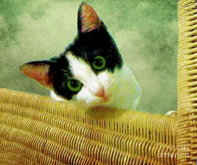 Photograph - Green Eyed Cat On Wicker by Janette Boyd