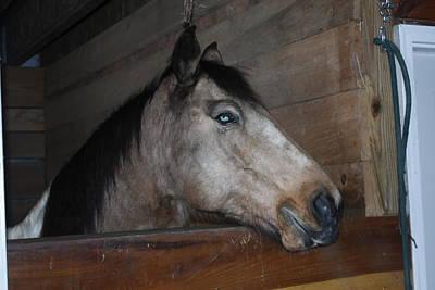 Photograph - Green Eyed Horse by David Yocum
