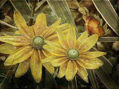 Art Print featuring the photograph Green Eyed Susie by Barbara Orenya