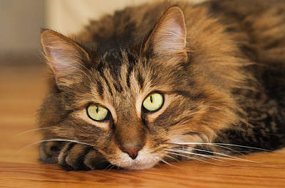 Cats Photograph - Green Eyes by Donna Doherty