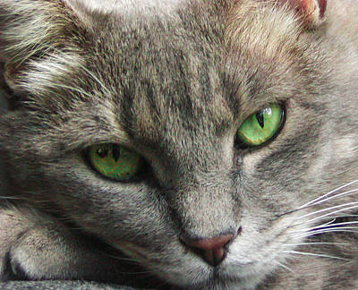 Art Print featuring the photograph Green Eyes by Leigh Anne Meeks