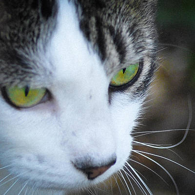 Photograph - Green Eyes by Ronda Broatch