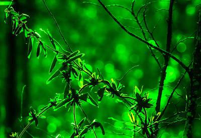 Photograph - Green Fantasy by J Riley Johnson