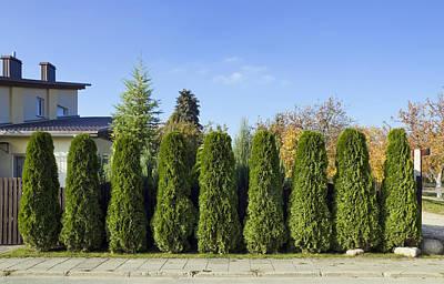 Green Fence Of Trees  Art Print by Aleksandr Volkov