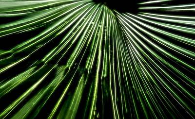 Green Fibers Original by Dan Sproul