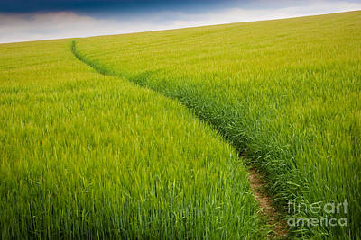 Path Photograph - Green Field by Michael Hudson