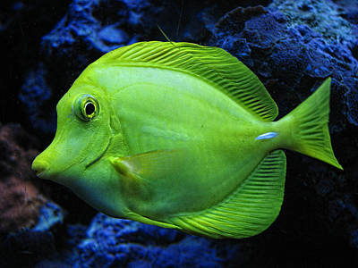 Photograph - Green Fish by Wendy J St Christopher