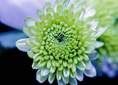 Green Flower Art Print by Amr Miqdadi