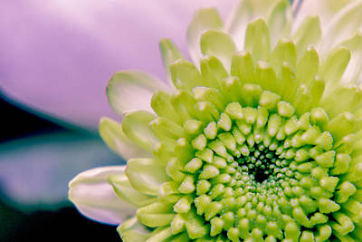 Photograph - Green Flower2 by Amr Miqdadi