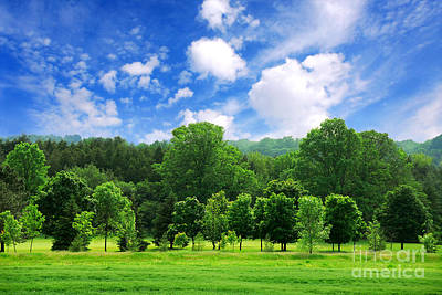Sports Royalty-Free and Rights-Managed Images - Green forest by Elena Elisseeva