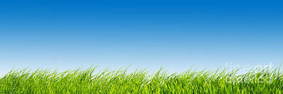Weather Photograph - Green Fresh Grass On Blue Sky Panorama. by Michal Bednarek