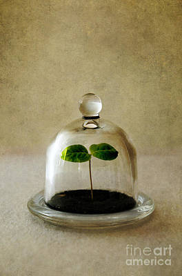 Photograph - Green Fresh Plant Under The Glass Cover by Jaroslaw Blaminsky