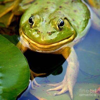 Amphibians Photograph - Green Frog At Trustom Pond  by Neal Eslinger