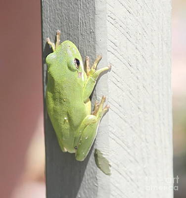 Green Froggy Art Print by Cathy Lindsey