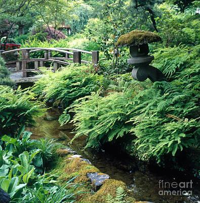Photograph - Green Garden by Hans Reinhard