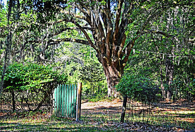 Photograph - Green Gate by Linda Brown