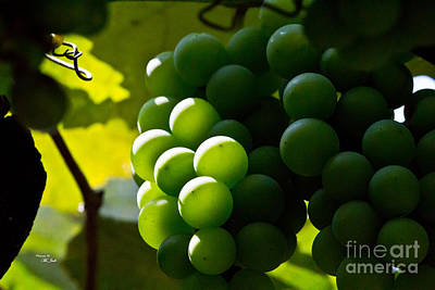 Photograph - Green Grapes by Ms Judi