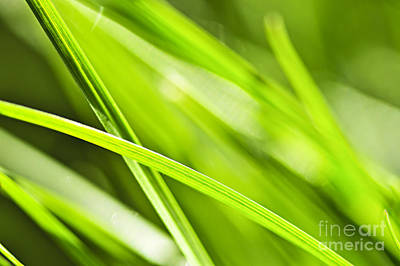 Raindrops Photograph - Green Grass Abstract by Elena Elisseeva