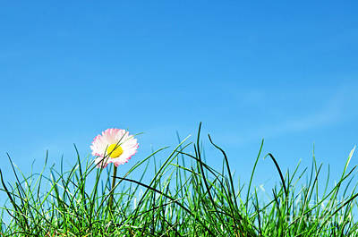 Daisies Photograph - Green Grass And A Flower by Michal Bednarek