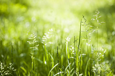 Botanic Photograph - Green Grass Flowering by Elena Elisseeva