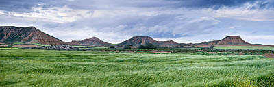 Navarra Photograph - Green Grass Growing In Bardenas Reales by Panoramic Images