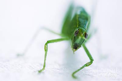 Green Grasshopper Caelifera Art Print by Iris Richardson