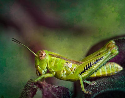 Photograph - Green Grasshopper II by David and Carol Kelly