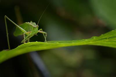 Photograph - Green Grasshopper On Leaf by Belinda Greb