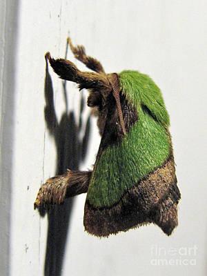 Green Hair Moth Art Print