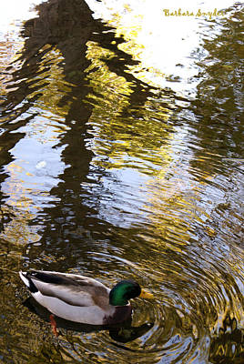 Green Head Mallard Duck Art Print by Barbara Snyder