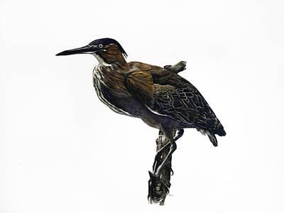 Painting - Green Heron by Rachel Root