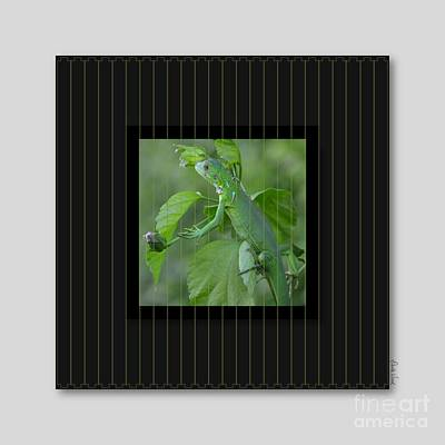 Photograph - Green Iguana-1 by Darla Wood
