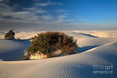 Photograph - Green In A Sea Of White by Adam Jewell