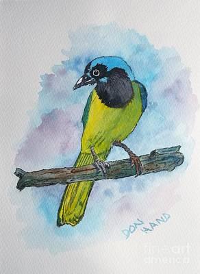 Plein Air Mixed Media - Green Jay Bird Texas by Don Hand