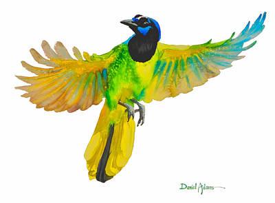 Da175 Green Jay By Daniel Adams Art Print