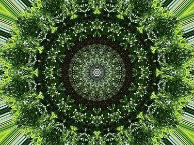 Photograph - Green Lace Floral1 Kaleidoscope by Sheri McLeroy